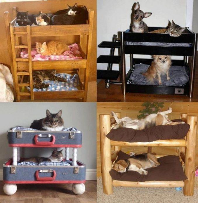 Diferentes modelos de cuchas de perros y gatos Imgenes