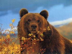 especies de osos extinguidas