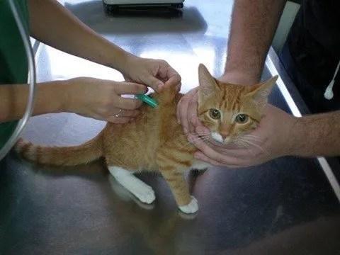 Vacunar a una mascota