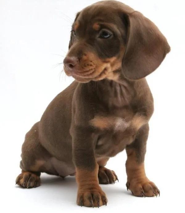 11 Cachorros para cualquiera que est teniendo un mal da