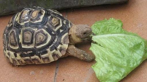 Cuidados de las tortugas  AnimalesMascotas