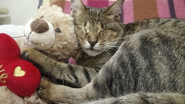 gatti ciechi in salvo