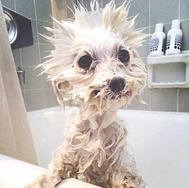 Tusk fa una doccia