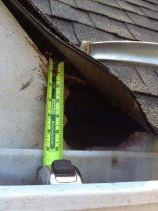 raccoon entry into attic