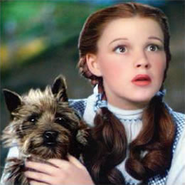 emerald-dorothy-and-toto-pl