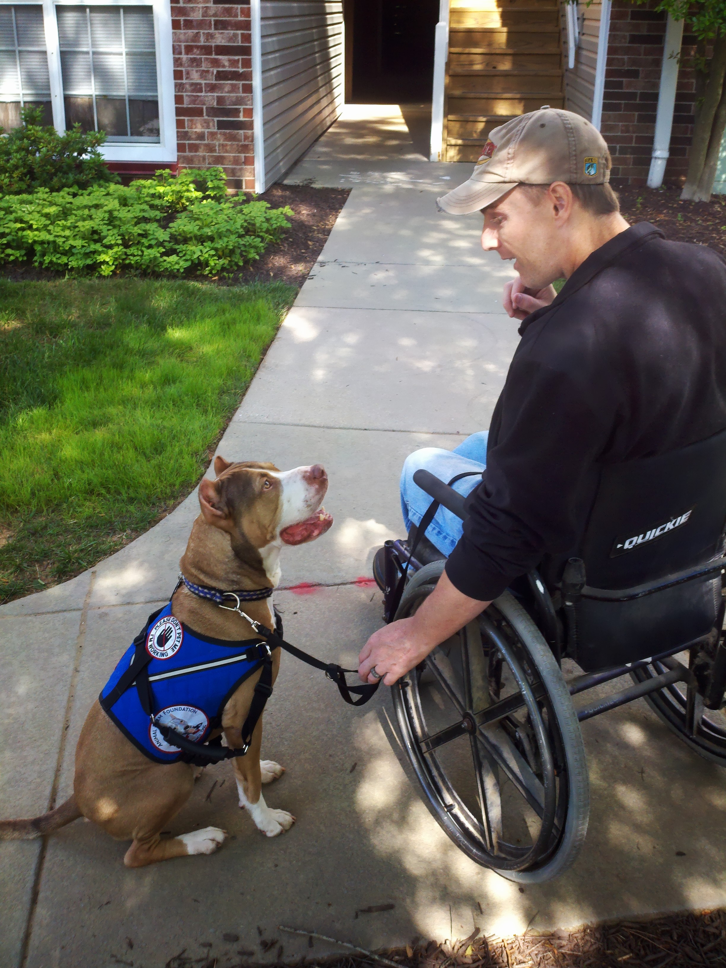 From shelters to service pit bull dogs change lives as jericho pit bull service dog 1betcityfo Images