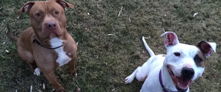 Letting Dogs Play and Experience the World Together Is One of the Best Ways to Increase Adoptions