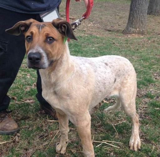 One of many mixed breed dogs of unknown origin that come through our shelter doors.