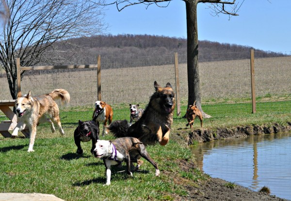 all-breed-playgroup