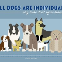 A Closer Look at All Dogs Are Individuals [INFOGRAPHIC]