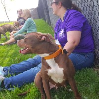 Prince George's County: High Price Paid For Failed Breed Ban