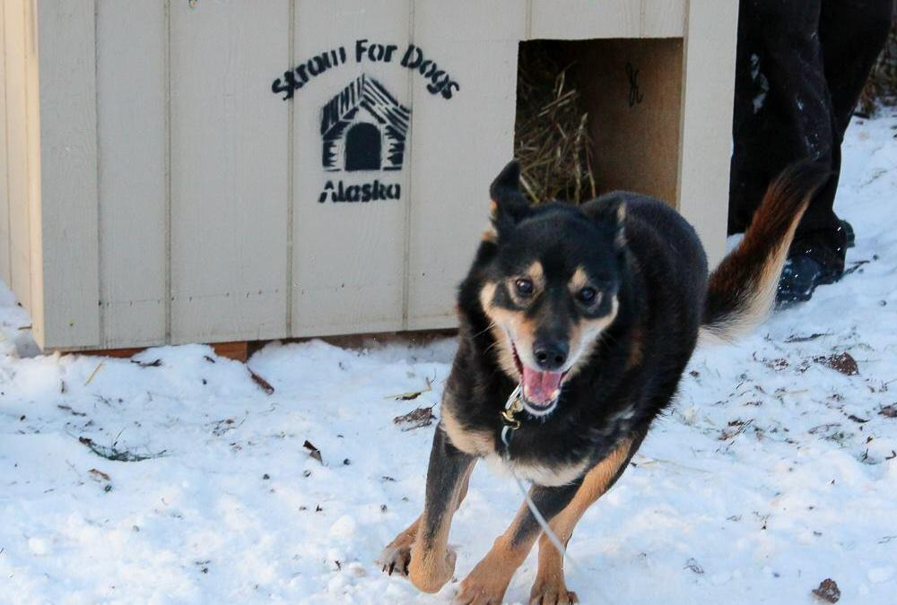 Compassionate Outreach: How Straw For Dogs Increases Quality of Life in Alaskan Communities
