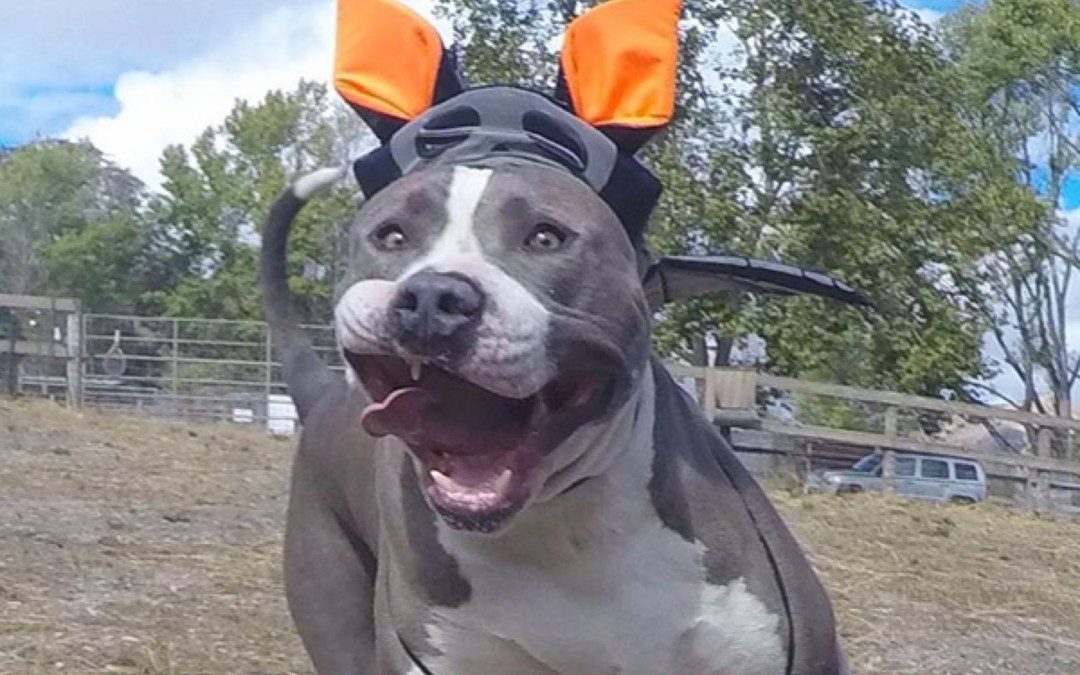 These Shelters Are Changing the Game to Get Their Dogs Adopted This Halloween