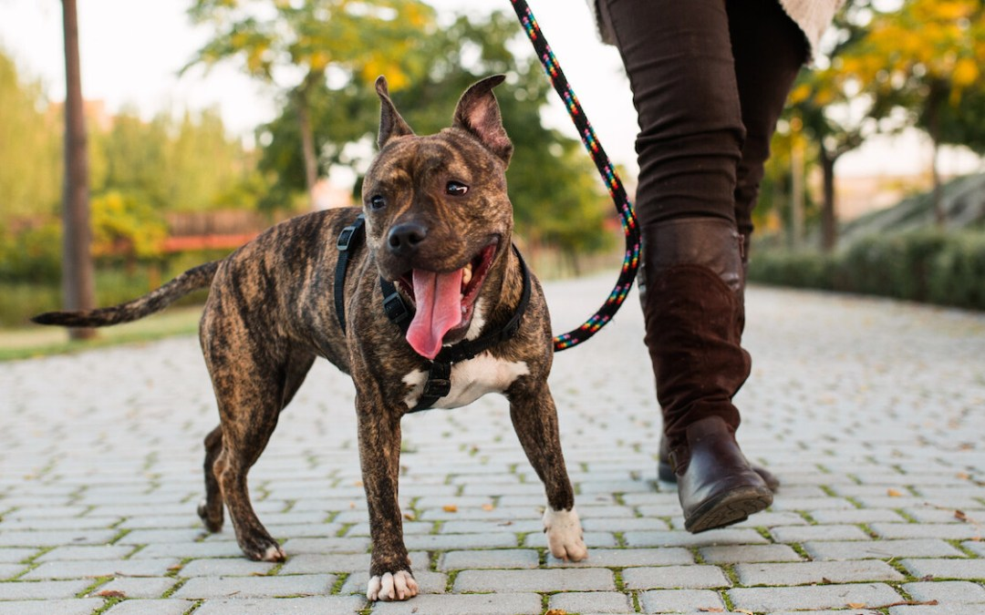 Breed Discrimination Is Serious and We're Working to End It