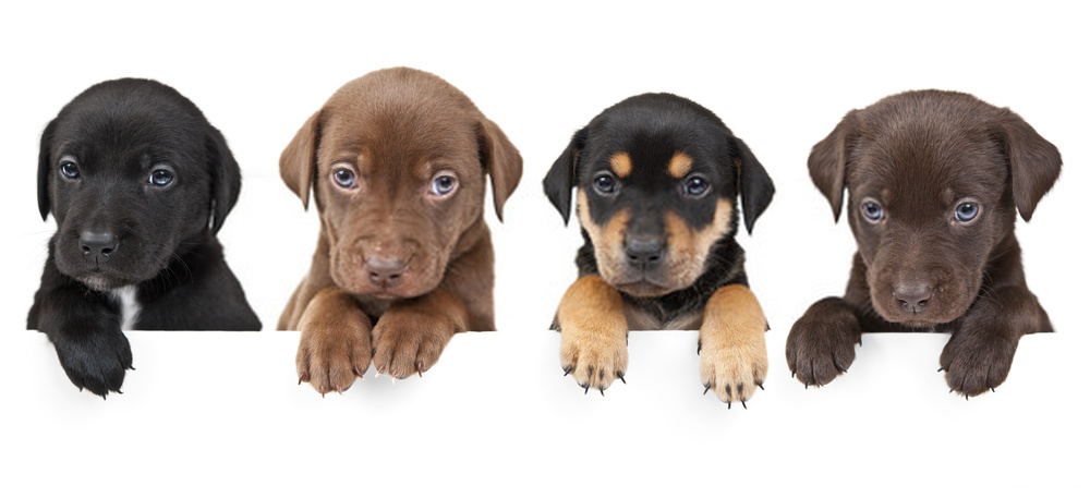 Top 10 Facts About Puppies -Amazing Things About New Born-Puppies
