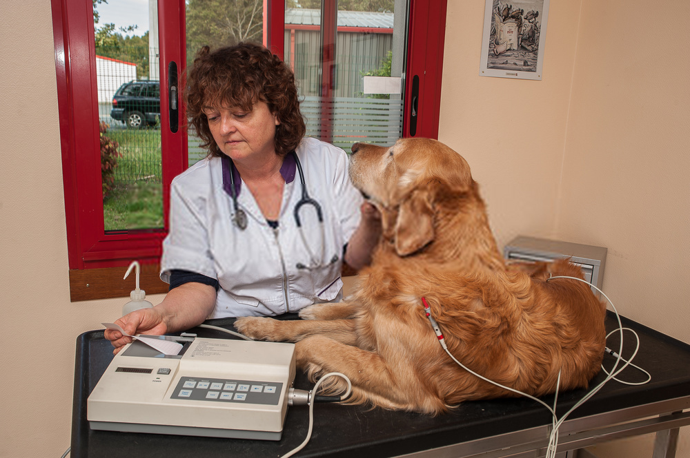 A Complete Guide on Dog Cancer Symptoms and Cautions 2018