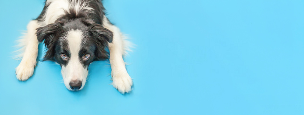 Puppy Care -A Brief Guide On Taking Good Care Of Dogs