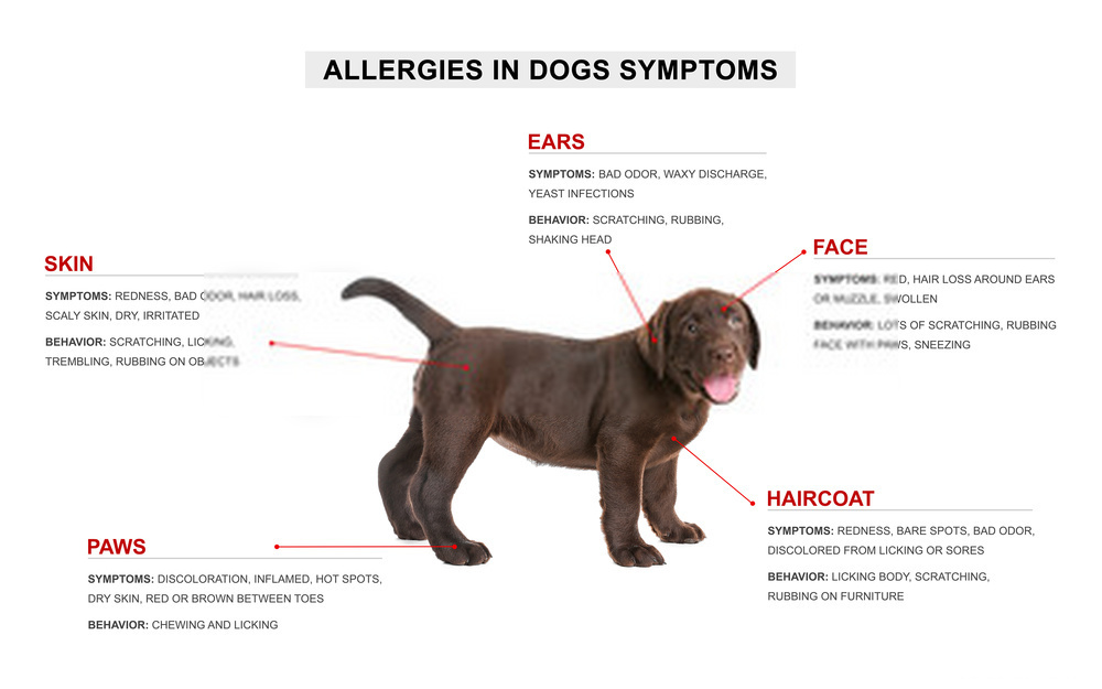 Down Syndrome Dog Symptoms -A Detailed Guide And Causes