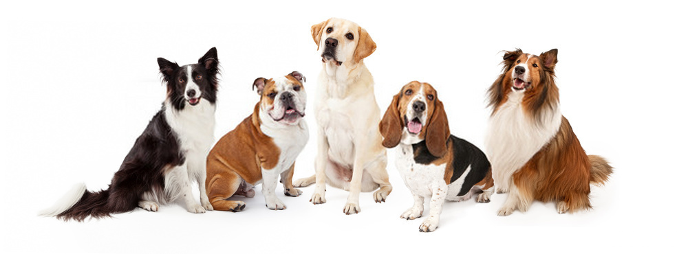 12 Extinct Dog Breeds That You have Never Heard Of