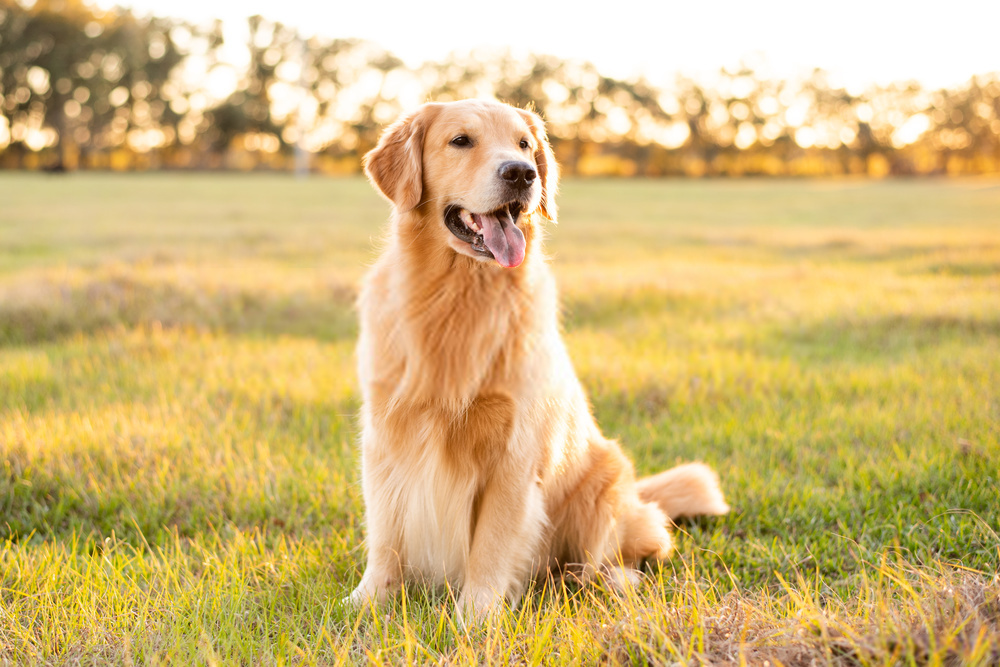 How i Removed The Congestive Heart Failure From My Dog