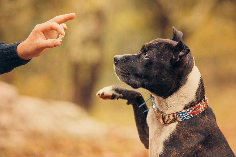 Top 15 Dog Training Treats | Amazing Canine Teaching Tips