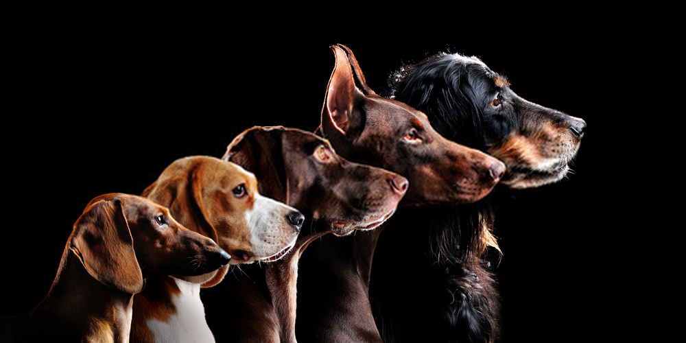 All About Dog Breeds -Precious Info Regarding Famous Canines