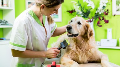 Best Dog Care Guide -Learn About Canine Diseases