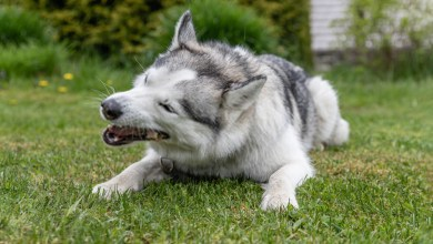 Top 3 Tips for Ear mite treatment for dogs-Diagnosis and Symptoms