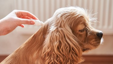 Flea Treatment For Dogs: What A Mistake!