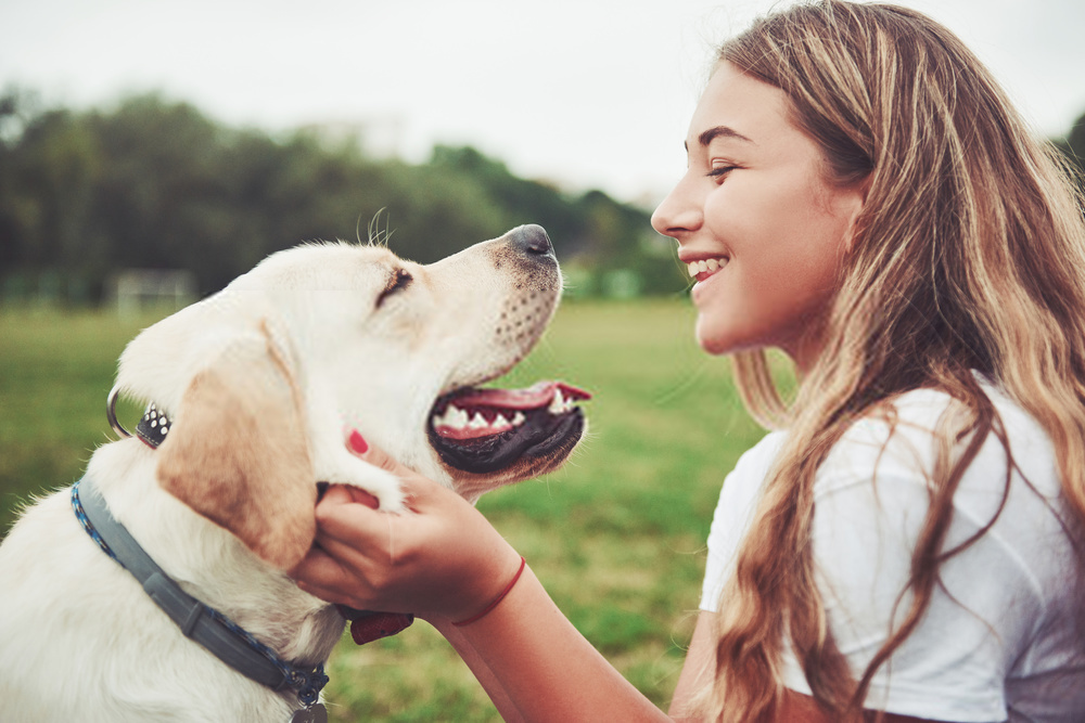 4 Dirty Little Secrets About The Diabetic Dog Food Industry
