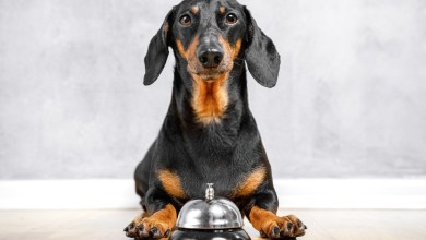 5 Reasons You Need To Stop Stressing About Can Dogs Eat Bell Peppers?