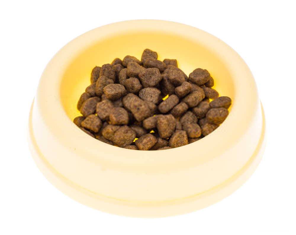 Can Dogs Eat Tuna – Is Tuna Safe Or Bad For Canines?