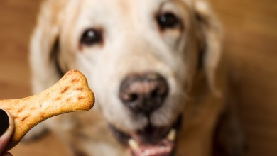Dogs Eat Graham Crackers