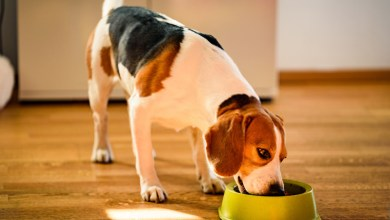 Can Dogs Eat Sugar Snap Peas?