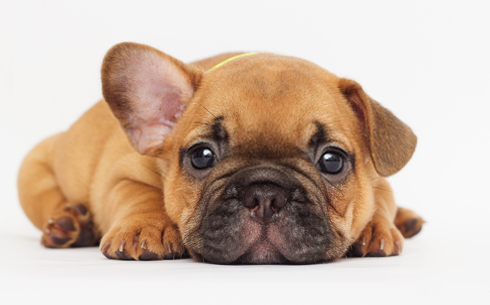 When can a puppy leave its mother?