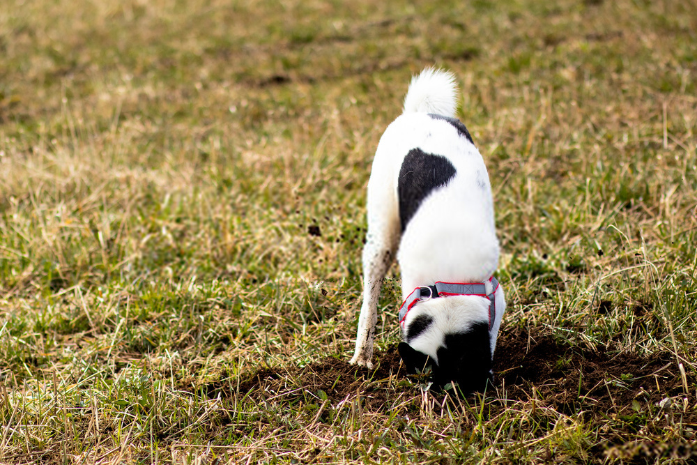 20 Tips to Stop Your Dog From Digging Under Fence