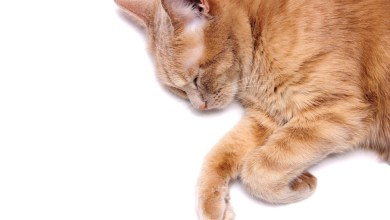 How to Euthanize a Cat Without a Vet