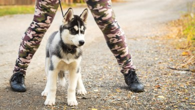 How to Teach a Dog to Attack on Command?