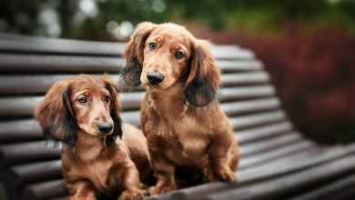 Why Do Dogs Stick Together After Mating?