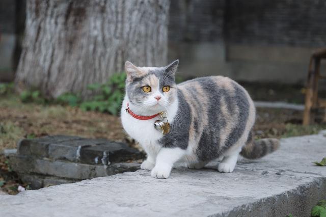 cat neck bell