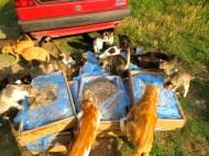 Die Katzenbande...