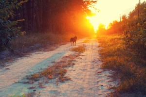 dogs speak, wander into the sunset, dogs passing, loss of a pet, Rainbow bridge,pet grief coach, Artichoke, love of a pet