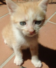gattino bianca 2
