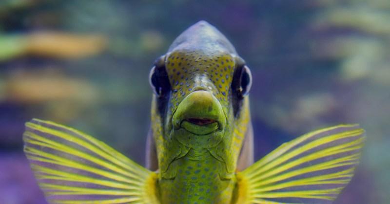 Lähikuva trooppisesta kalasta.