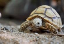 Come prenderti cura della tua tartaruga