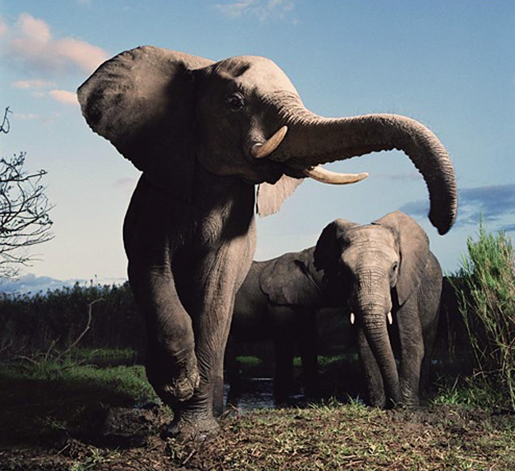 Africa E I Suoi Animali