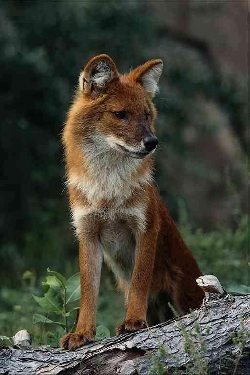 animali in via di estinzione  animalinelmondo