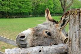 grey donkey head gate field farm