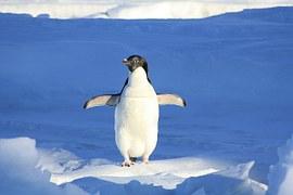 penguin ice blue sea cold