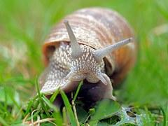 snail shell feelers mollusc grass